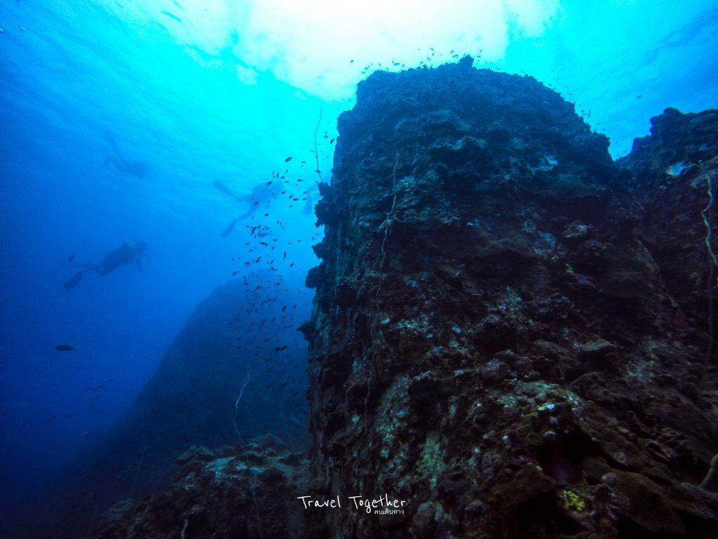 ดำน้ำเกาะเต่า