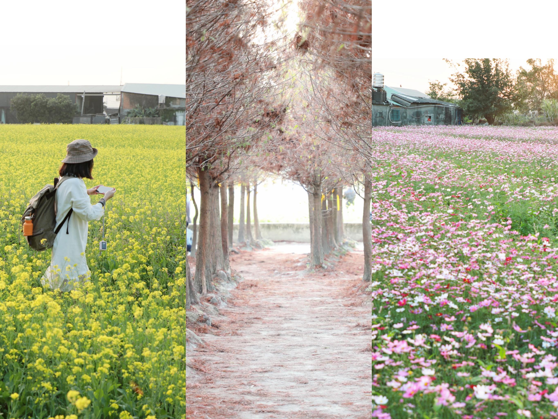 ที่เที่ยว Taichung กับทิวสนและทุ่งดอกไม้ สวยอลังการมากก